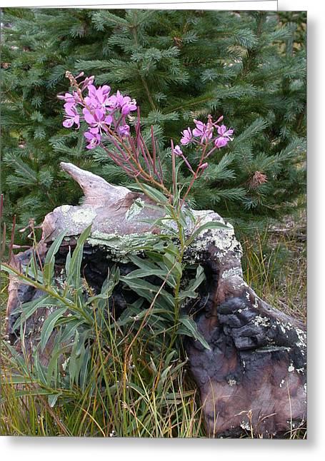 Flowering Stump Greeting Card