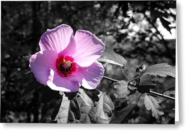 Flowering Greeting Card