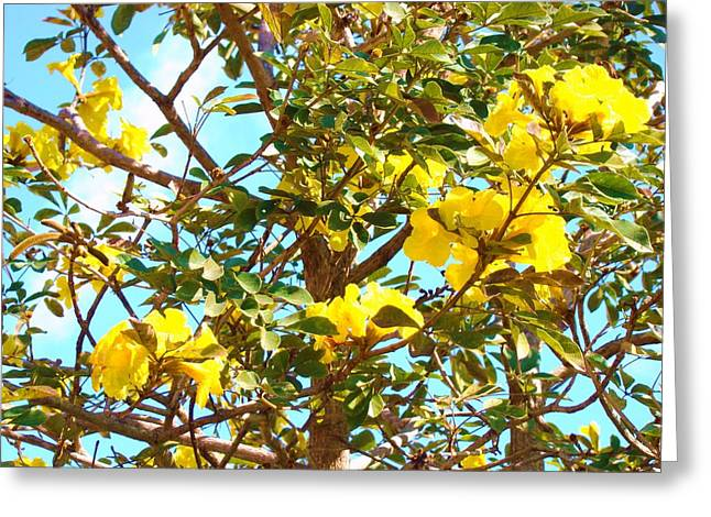 Flowering Tree Greeting Card by Van Ness