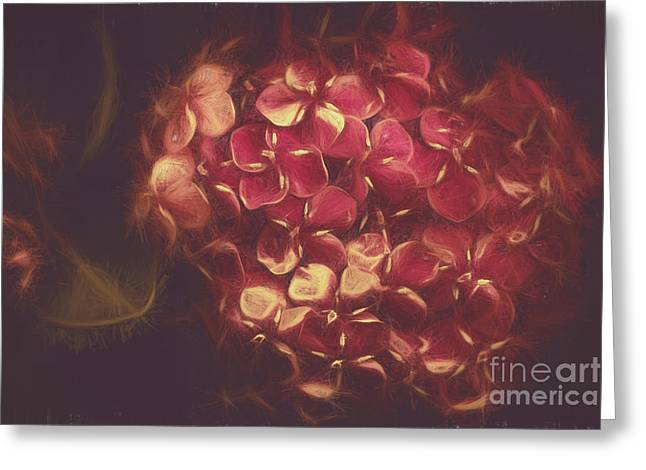 Flowering Unity In Collective Closeness Greeting Card by Jorgo Photography - Wall Art Gallery