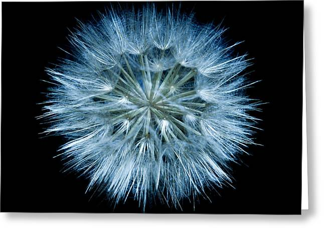 Flowering Weed 001 Greeting Card by Todd Soderstrom