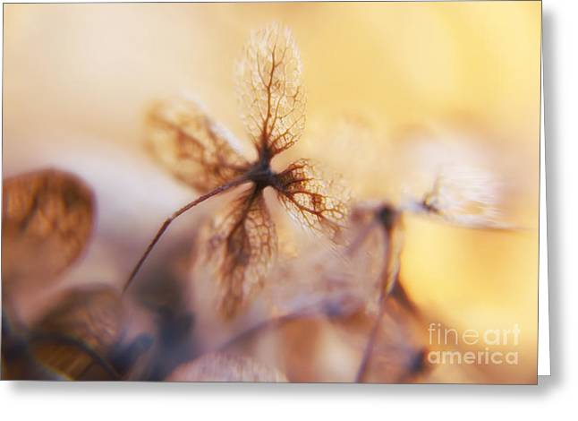 Flowers 3 Greeting Card by Justyna JBJart