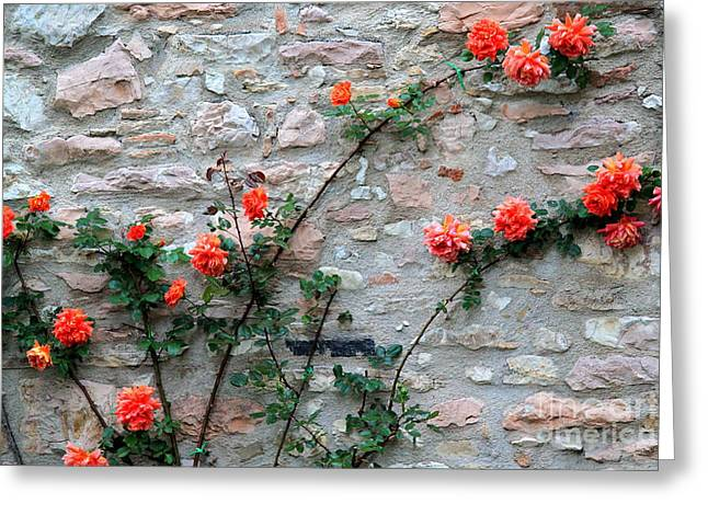 Greeting Card featuring the photograph Flowers 5-assisi by Theresa Ramos-DuVon