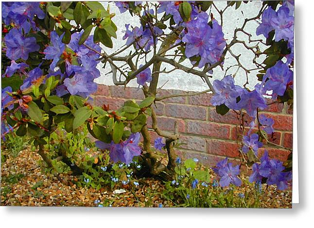 Flowers Against The Wall Greeting Card by Lenore Senior and Constance Widen
