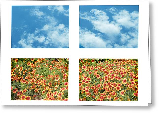Flowers And Sky Greeting Card by Ann Powell