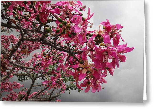Flowers And Thorns And The Sky Adorned  Greeting Card by Kenneth James