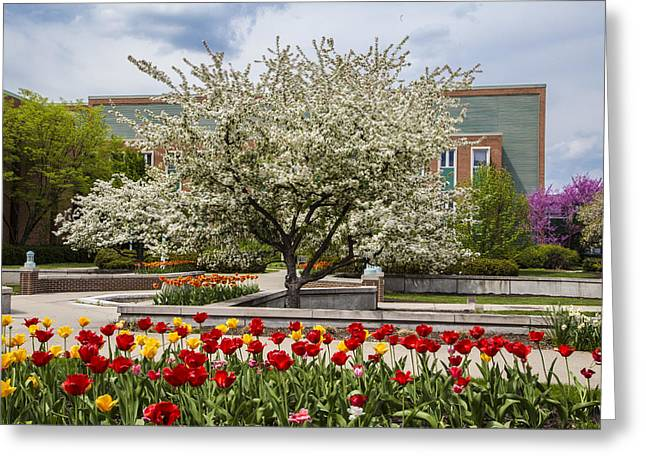 Flowers And Tree At Michigan State University  Greeting Card by John McGraw