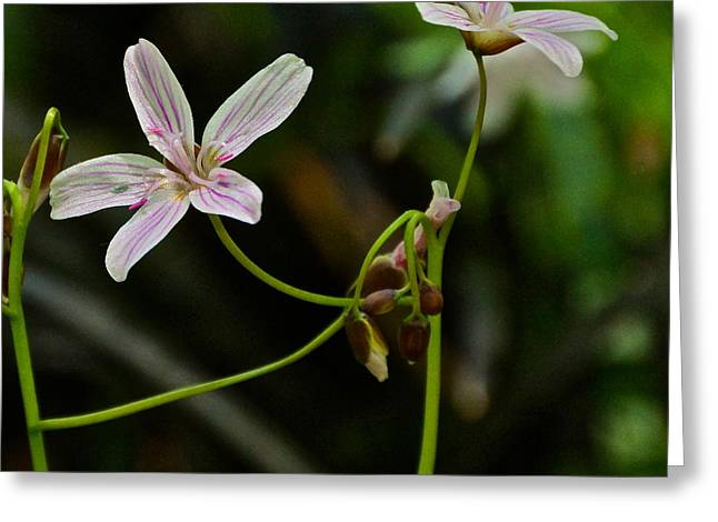Flowers Are Smiles Greeting Card by Byron Varvarigos