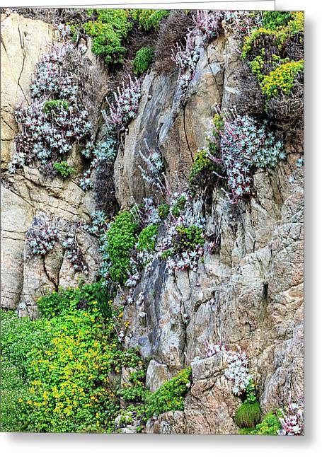 Flowers As Cliff Hangers Greeting Card