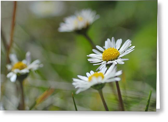 Flowers At The Mountains Greeting Card by Guido Montanes Castillo