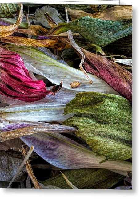 Flowers Greeting Card by Bob Orsillo
