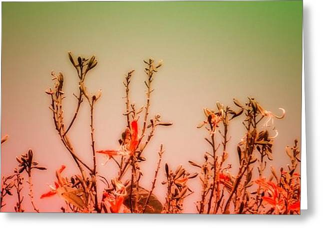 Flowers Dreaming Greeting Card by Vidyalakshmi AC