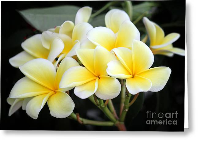 Flowers For A Lei Greeting Card by Sabrina L Ryan