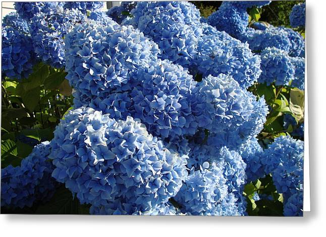 Flowers From Dalles Dam Visitor Center Greeting Card by Iam Wayne