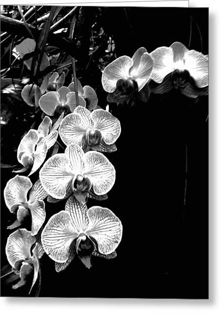 Flowers In Black And White Greeting Card