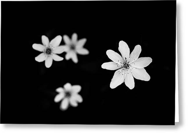 Flowers In Black Greeting Card