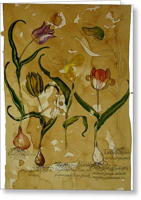 Flowers In Herbarium Greeting Card by Arual Jay
