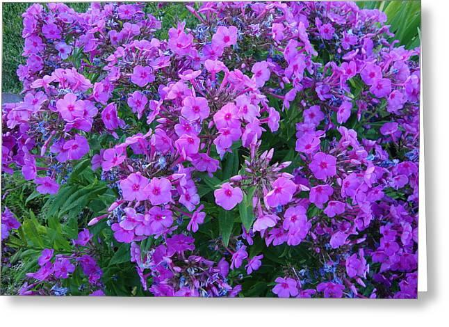 Flowers In Idaho Falls Greeting Card by Iam Wayne