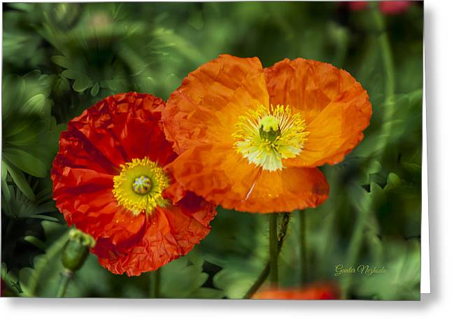 Flowers In Kodakchrome Greeting Card
