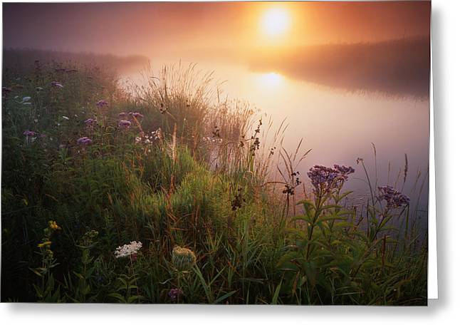 Flowers In The Fog Greeting Card by Ray Mathis