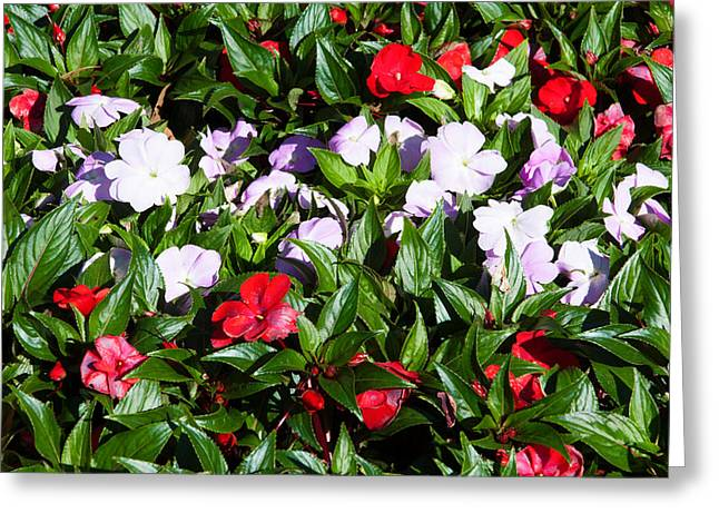 Flowers In The Garden At Villa Greeting Card by Panoramic Images