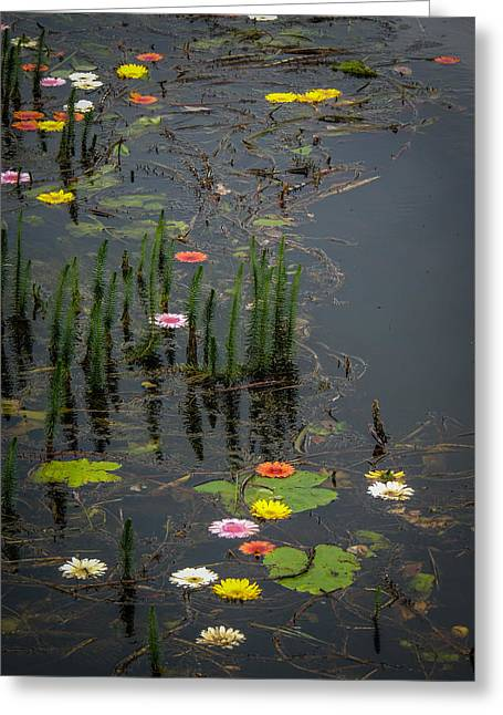 Flowers In The Markree Castle Moat Greeting Card