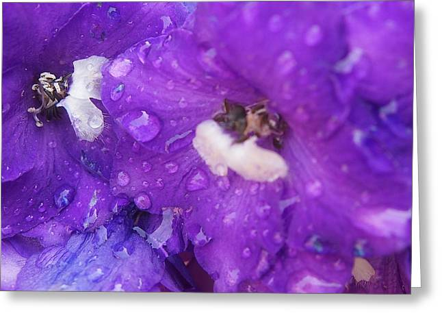 Flowers In The Rain Greeting Card by Chrissy Dame