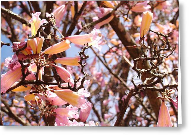 Flowers In The Tree In Three Dimensions Greeting Card by Van Ness