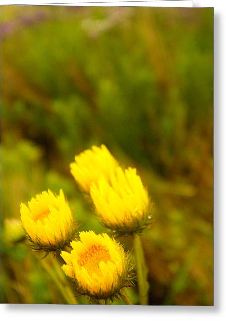 Flowers In The Wild Greeting Card by Alistair Lyne