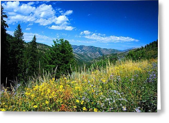 Flowers In Yellowstone Greeting Card