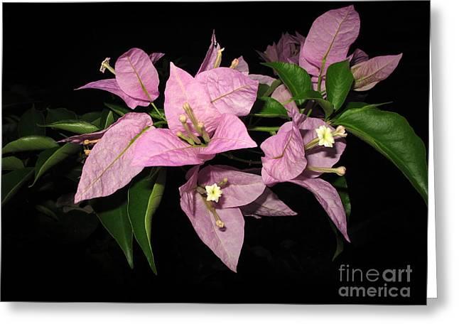 Flowers Island Lembongan Greeting Card by Sergey Lukashin