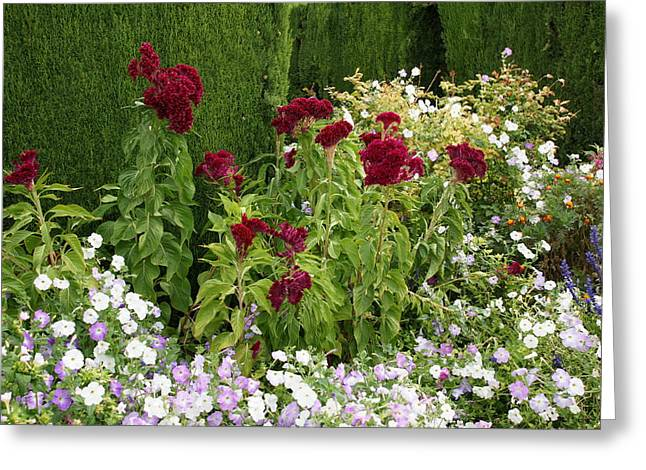 Flowers Of Alhambra Greeting Card