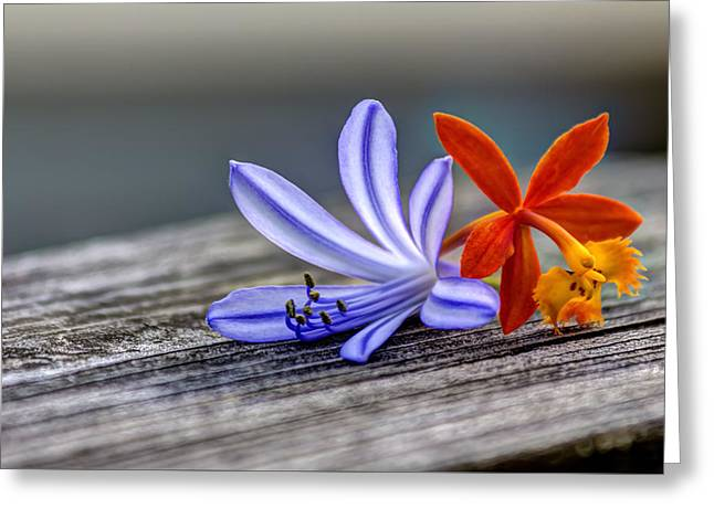 Flowers Of Blue And Orange Greeting Card