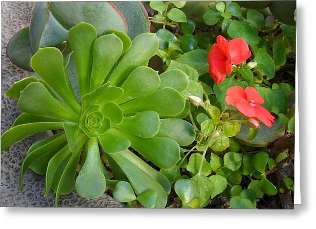 Flowers Of Laguna Woods Greeting Card