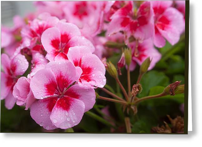 Flowers On A Rainy Sunday Afternoon Greeting Card