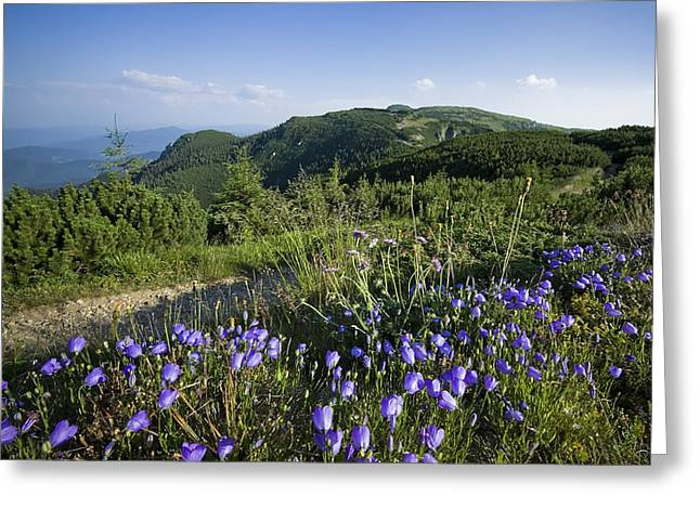 Flowers On Summer Mountain  Greeting Card by Ioan Panaite