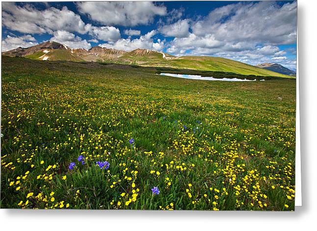 Flowers On The Divide Greeting Card by Darren  White