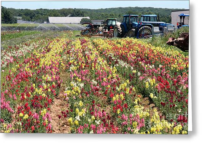 Greeting Card featuring the photograph Flowers On The Farm-2 by Steven Spak