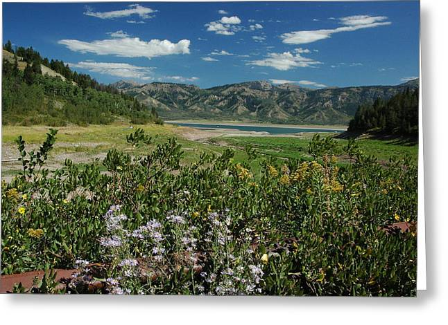 Flowers On The Palisades Resevoir Idaho Greeting Card