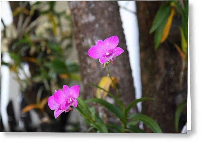 Flowers - Panviman Chiang Mai Spa And Resort - Chiang Mai Thailand - 01131 Greeting Card by DC Photographer