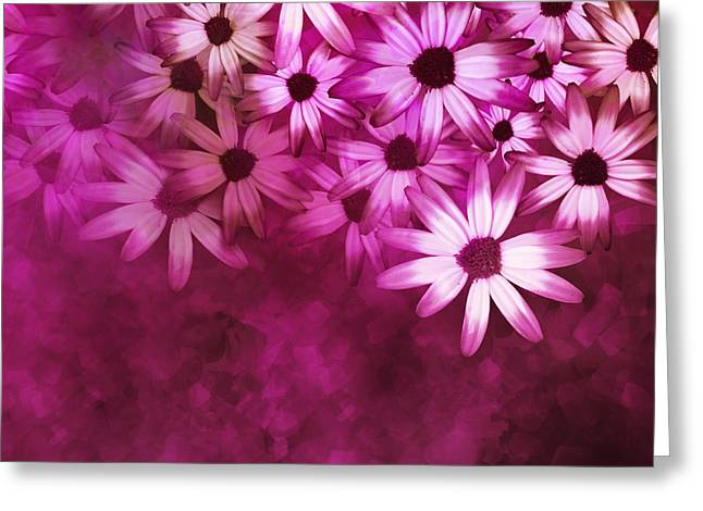 Flowers Pink On Pink Greeting Card by Ann Powell