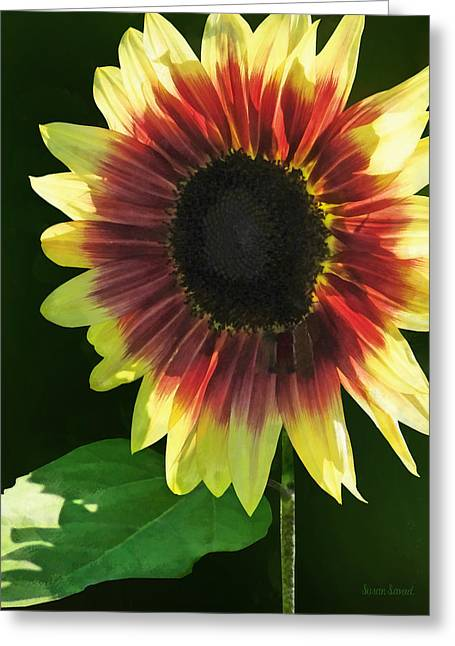 Flowers - Sunflower Ring Of Fire Greeting Card by Susan Savad