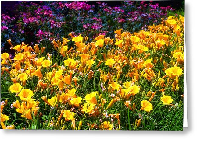 Greeting Card featuring the photograph Flowers by Tim McCullough
