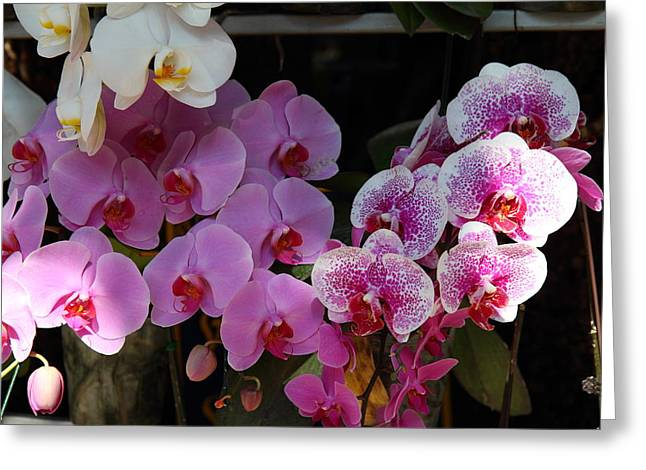 Flowers - Wat Phrathat Doi Suthep - Chiang Mai Thailand - 01131 Greeting Card by DC Photographer