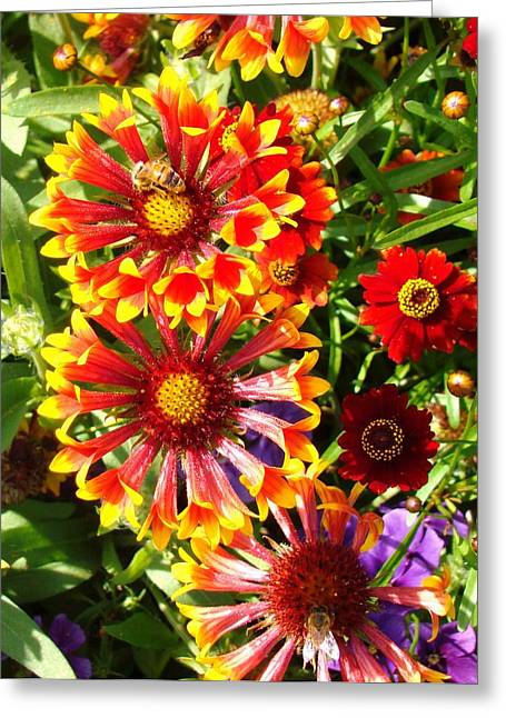 Flowers With Pollinators Greeting Card by Van Ness