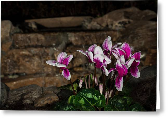 Flowers With Waterfall Backdrop Greeting Card
