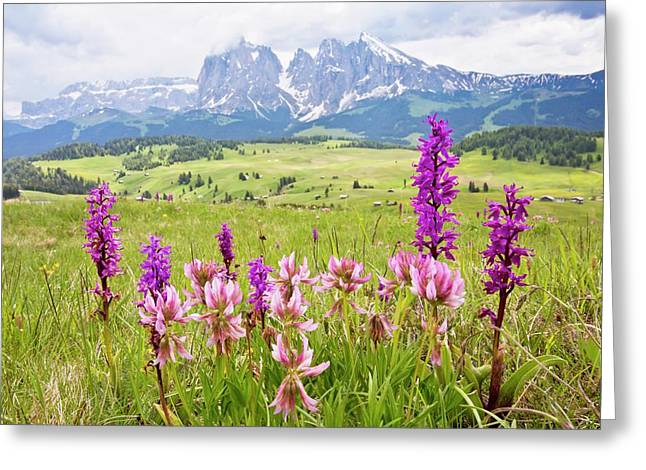 Flowery Alpine Meadow Greeting Card by Bob Gibbons