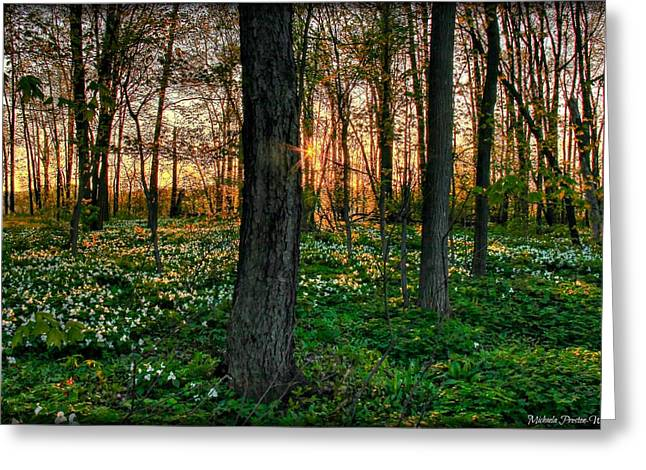 Flowery Sunset Greeting Card by Michaela Preston