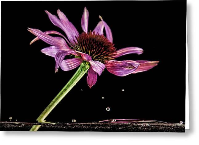 Flowing Flower 6 Greeting Card
