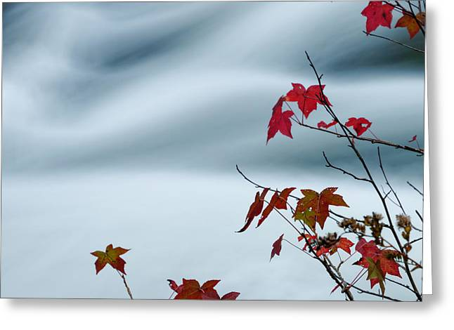 Flowing Water And Changing Leaves Greeting Card